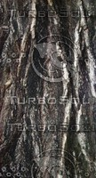dark rough bark.jpg
