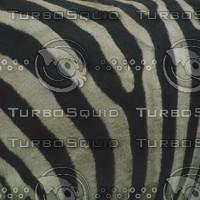 zebra stripes.jpg