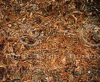 Leaves01.jpg