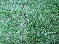thick grass.jpg