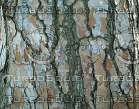 chipped tree bark.jpg
