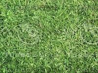 grass and clover.jpg