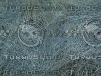 dead grass2.jpg