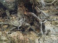 tree roots2.jpg