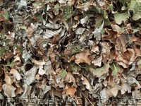 dried leaves2.jpg