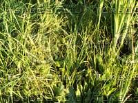 bright green grass.jpg