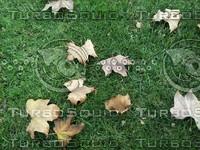 leaves on grass.jpg