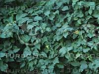 green leaves2.jpg