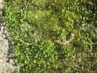 unkept grass.jpg
