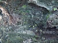 coarse bark.jpg