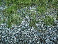 grassy gravel ground.jpg