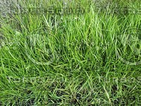 grass ground.jpg