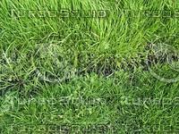 grass ground.jpg