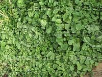 small plant foliage.jpg