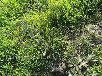 grass ground .jpg