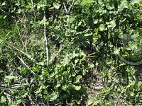 green weeds.jpg
