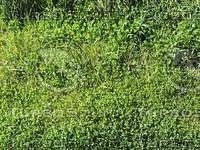 grass and weeds.jpg