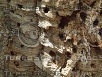 tree bark holy.jpg