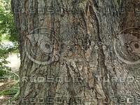 tree trunk.jpg