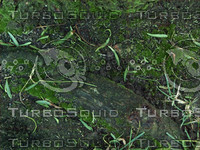 mossy ground.jpg