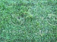 grassy ground.jpg