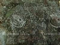 mossy ground detail.jpg