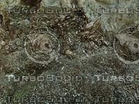 decay wood.jpg