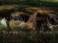 dead grassy ground.jpg
