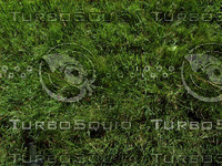 green grass plant.jpg