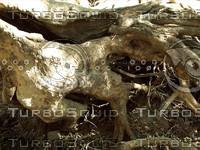 gnarled tree roots.jpg