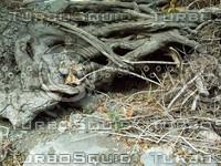 gnarled wood roots.jpg