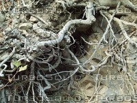 dirty roots wood.jpg