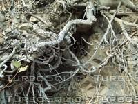 dirty roots wood.jpg