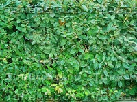 small leaves plants.jpg