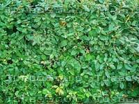 small leaves plants.jpg