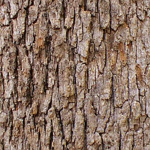 bark01.jpg