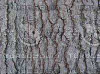 gray pine.jpg