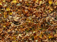 gold leaves.jpg