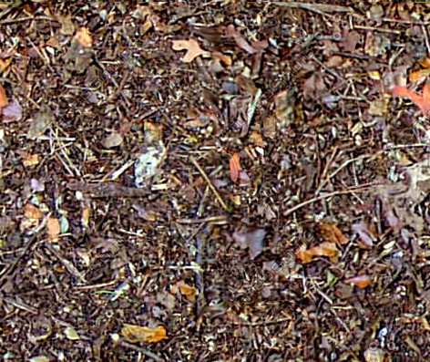 Texture jpg forest floor ground Dark Forest Floor Texture