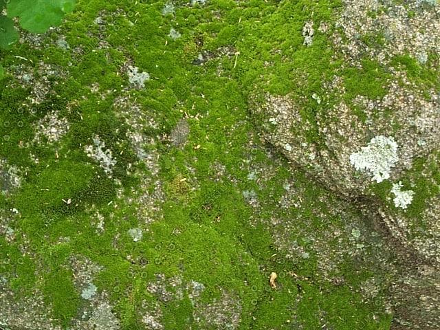 mossy_rock_2.jpg