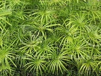 plant tropical tile.jpg