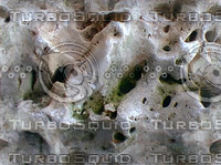 holey white sea rock.jpg