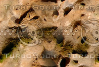 holey tan sea rock.jpg