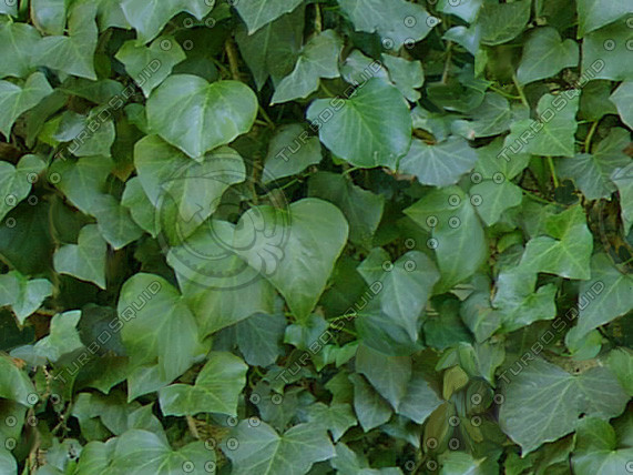 shrub05.jpg