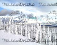 snow043.jpg