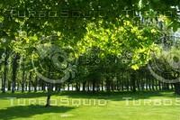 treecanopy.jpg