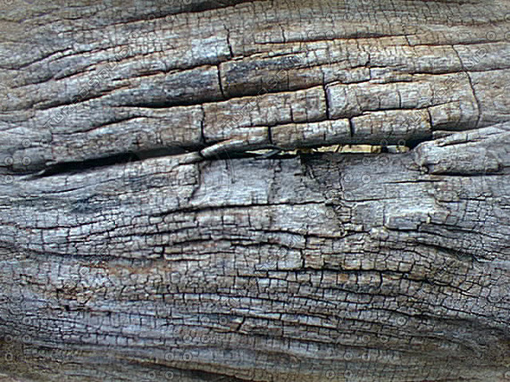wood12.jpg