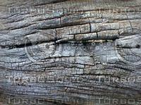 drift wood.jpg
