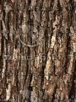 Bark001.jpg