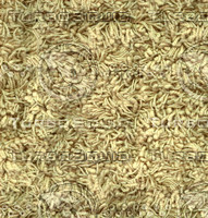carpet006 xlarge.jpg
